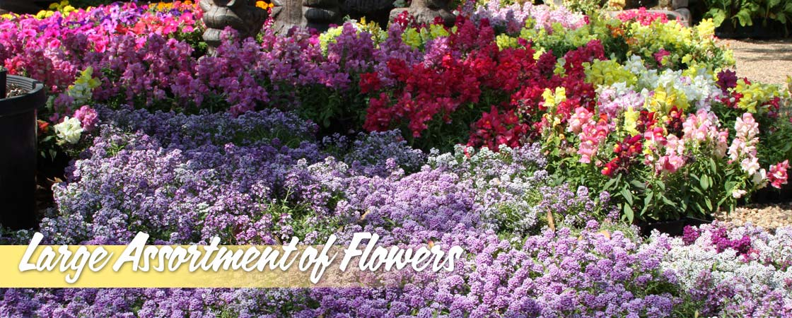 Large-Assortment-of-Flowers